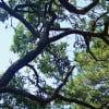 trees-webbanner