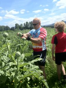 eric harvests artichokes