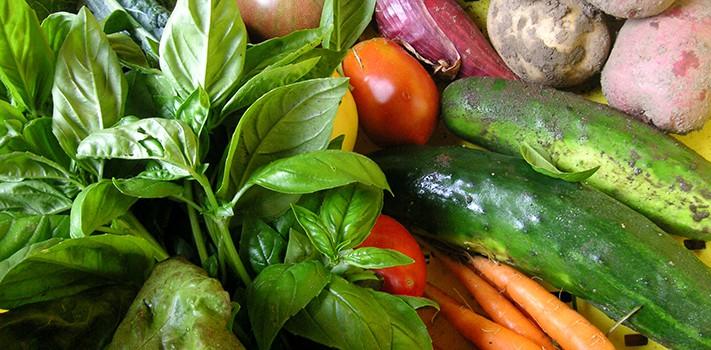adamah-veggies-banner