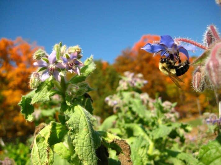 bee-blooms
