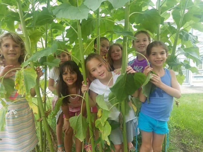 Sunflower children