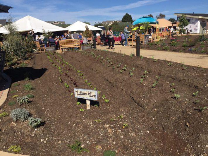 Freshly seeded lettuce at Urban Adamah's new site | Photo credit: Frances Dinkelspiel