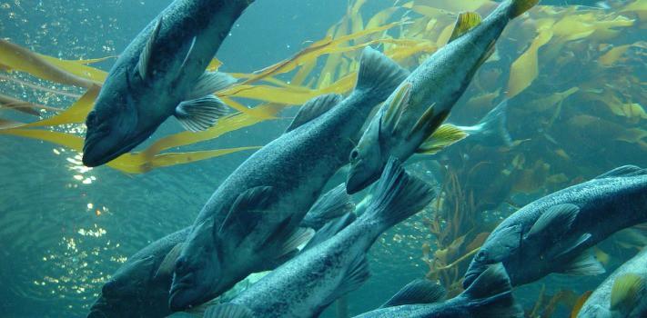 Kosher Sustainable Fish - Hazon