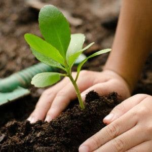 Hazon Detroit: Family Tu b'Shvat - Making Trees for Reforestation