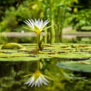 Hazon Colorado: Tu b'Shvat Story Adventure Program Trip to the Botanic Gardens