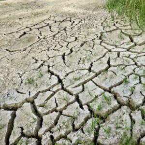 Hazon Colorado: Tu b'Shvat - A Conversation about Jewish Stewardship & Climate Change
