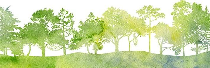 trees image tu b'shvat